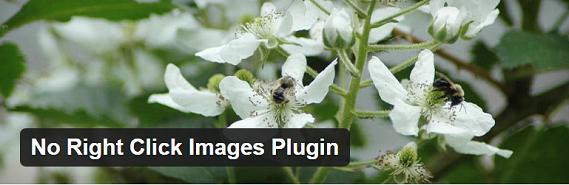 نحوه جلوگیری از کپی برداری از تصاویر وبسایت در وردپرس